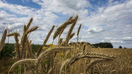 Tranzactie in agribusiness. Grupul libanez Maria vrea sa preia Agrirom