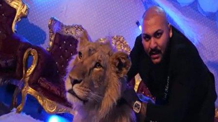 Leul manelistului Dani Mocanu, salvat de activisti si dus in Olanda