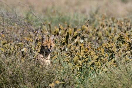 Un barbat a crezut ca are un leopard in curte si a sunat la apelul de urgenta.  Ce era, de fapt, animalul