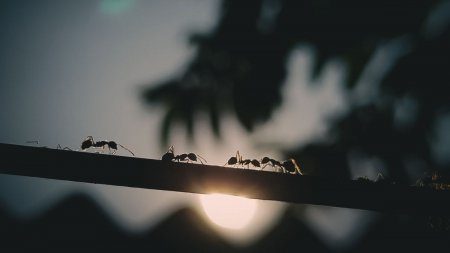Nu va grabiti sa alungati furnicile din gr<span style='background:#EDF514'>ADINA</span>