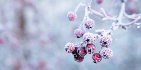 Vine iarna in Romania! ANM anunta lapovita si ninsoare. Un ger cumplit va lovi toata tara