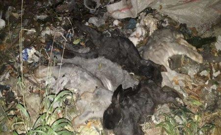 350 de rate si 60 de iepuri au murit intr-un incendiu izbucnit intr-o gospodarie din Botosani