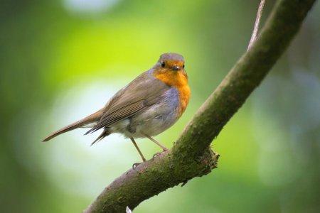 Canta, zboara, inalta-te: Azi e Ziua mondiala a pasarilor migratoare