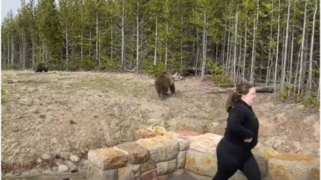 Tanara condamnata la inchisoare, pentru ca s-a apropiat prea mult de un urs, pentru a-l <span style='background:#EDF514'>FOTOGRAFIA</span>, in SUA