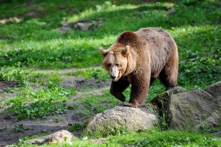 Condamnata la inchisoare si amendata pentru ca a <span style='background:#EDF514'>FOTOGRAFIA</span>t de aproape un urs