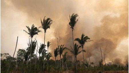 Incendiile ilegale fac scrum Padurea Amazoniana. Flacarile sunt atat de puternice incat si pamantul este car<span style='background:#EDF514'>BONI</span>zat