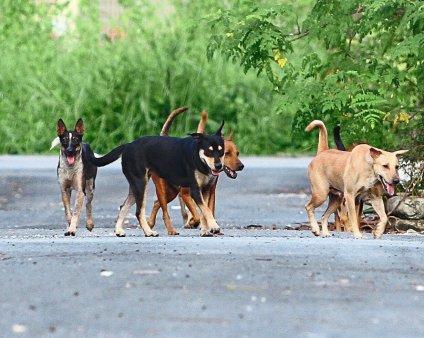 Furie in Vietnam dupa uciderea a 13 caini ai caror stapani aveau COVID-19