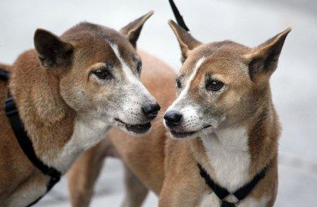 Revolta in Vietnam, dupa ce autoritatile sanitare au ucis 13 caini pentru ca stapanii lor erau infectati cu COVID