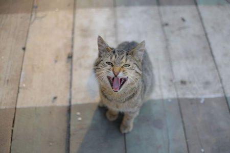 Un fost soldat a atacat un adapost pentru animale si a luat un ostatic, cerandu-si inapoi pisica pierduta