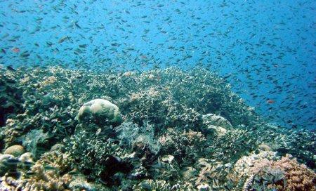 Ciuma alba, boala care distruge coralii. Ce solutie au gasit oamenii de stiinta