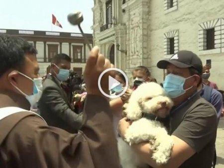 VIDEO Ceremonie de binecuvantare a pisicilor si a cainilor in Peru
