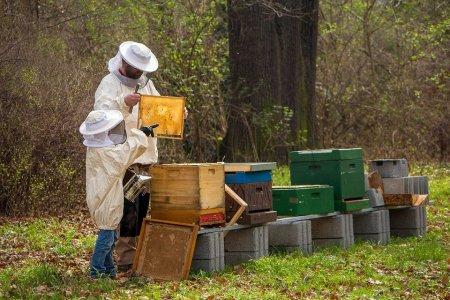 Subventii de peste 59 milioane lei pentru apicultori. 50% din fonduri vin de la UE