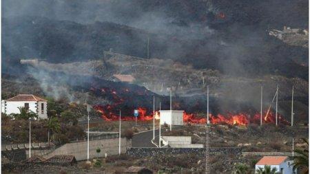 Animalele de companie, abandonate pe insula La Palma, intre raurile de lava. Sunt hranite cu ajutorul dronelor