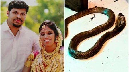 Un barbat din India si-a ucis sotia <span style='background:#EDF514'>BOGAT</span>a cu o cobra, dupa ce nu a reusit sa o omoare cu o vipera
