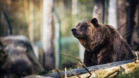 Doi barbati din Mehedinti au fost atacati de un urs. A fost transmisa avertizare Ro-Alert
