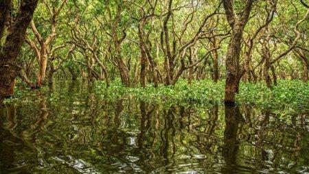 Misterioasa padure de mangrove fara iesire la mare din inima Peninsulei Yucatan