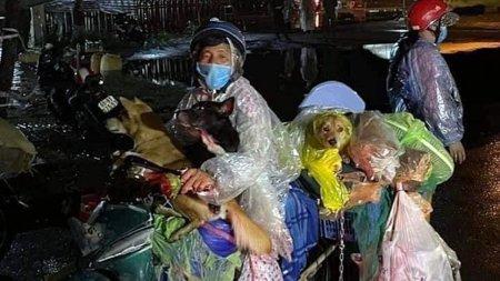 Furie generala in Vietnam: 12 caini au fost ucisi dupa ce stapanii lor s-au infectat cu COVID-19