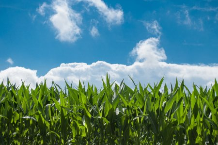 Scumpirea ingrasamintelor schimba strategia fermierilor. Francezii se reorienteaza, romanii recurg la credite