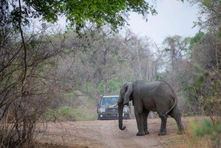 Un elefant a o<span style='background:#EDF514'>MORAT</span> un turist. Doua persoane au fost ucise in doar o saptamana