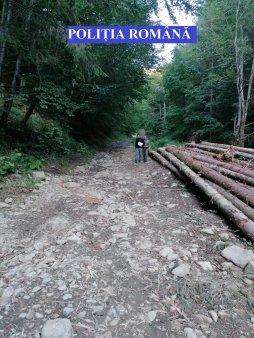 Camere video pe drumurile forestiere, pentru a limita furtul de lemne