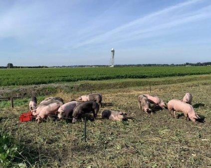 Patrula de porci in unul dintre cele mai aglomerate <span style='background:#EDF514'>AEROPORT</span>uri din Europa. La ce ajuta acestia