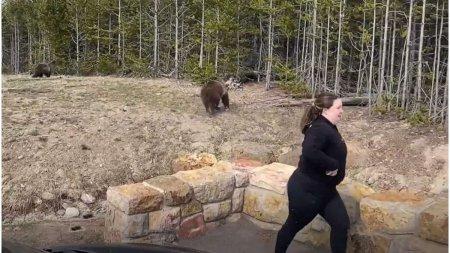 O americanca a fost condamnata la inchisoare dupa ce s-a apropiat prea mult de o ursoaica si puii ei pentru a-i <span style='background:#EDF514'>FOTOGRAFIA</span>