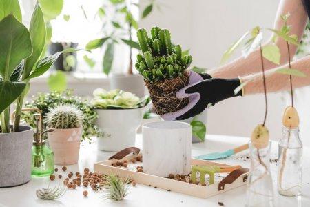 Plante care absorb umiditatea in casa
