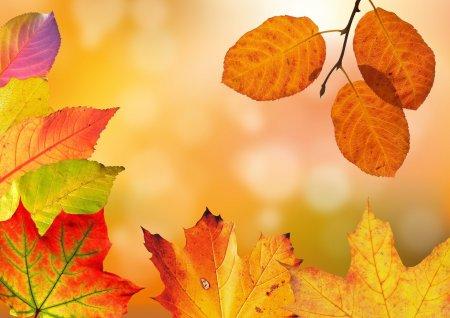 Prognoza meteo: Vreme schimbatoare, temperaturi oscilante si precipitatii locale, pana la finele lunii octombrie