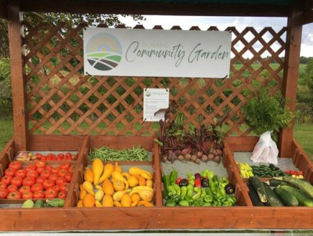 Un oras mic, dar smart isi creste propriile legume si fructe, iar oamenii le pot culege gratis FOTO VIDEO