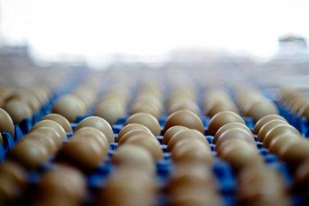 Italienii de la Eurovo au ajuns la afaceri de 35,7 milioane lei in 2020, minus 41%, cu producatorul de oua Super Eggs Braila