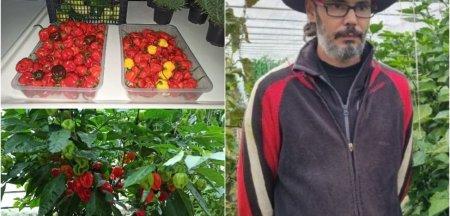 Cum se cultiva cei mai iuti ardei din lume in Romania. Agricultorul cu trei facultati care obtine planta exotica FOTO