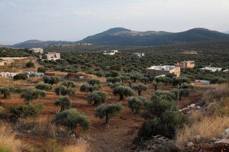 Nu e Spania sau Italia. Ce sat pretinde ca face cel mai bun ulei de masline din lume