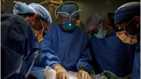 <span style='background:#EDF514'>CHIRURGI</span>i din SUA au transplantat un rinichi de porc unui om, in premiera mondiala