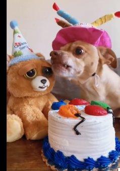 Un catel gelos reactioneaza nervos cand cineva incearca sa guste din tortul pentru ziua sa de nastere, intr-un video viral