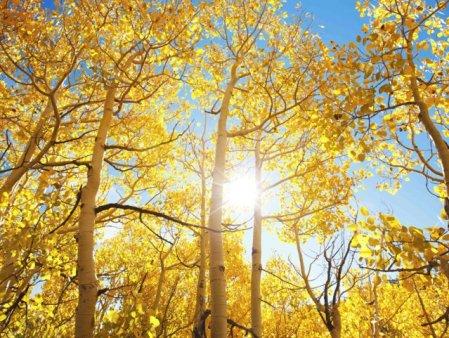 METEO Luna noiembrie incepe cu vreme calda