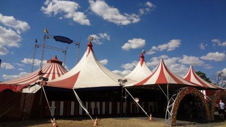 Franta va interzice prezenta <span style='background:#EDF514'>ANIMA</span>lelor salbatice la circ si in delfinarii