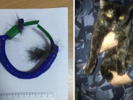 O pisica din Rusia a fost arestata pentru serviciile facute de<span style='background:#EDF514'>TINUT</span>ilor