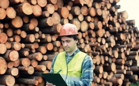 Ce salarii poti sa castigi in industria lemnului: un sef de atelier incaseaza 4.300 de lei, un inginer de calitate, 5.000 de lei
