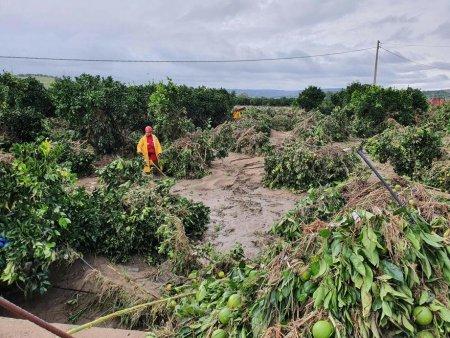 Cod rosu de furtuna si ploi in Calabria si Sicilia. Masini si case, <span style='background:#EDF514'>LUAT</span>e de ape