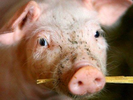 Antreprenori locali. <span style='background:#EDF514'>CALIN</span> Musca, proprietarul Porkprod, care investeste 10 mil. euro intr-o linie integrata de productie: Costurile totale cu constructia s-au dus mult in sus. Compania are trei ferme de porci, la Iratosu, Macea si Olari, judetul Arad